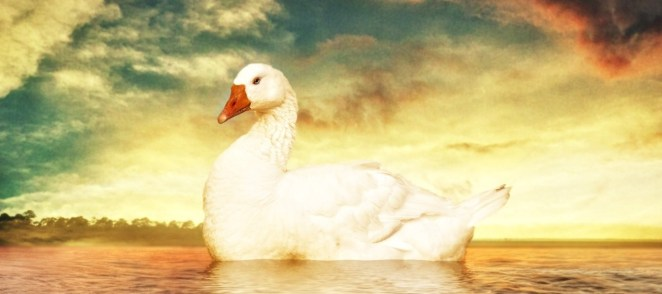 goose-on-water